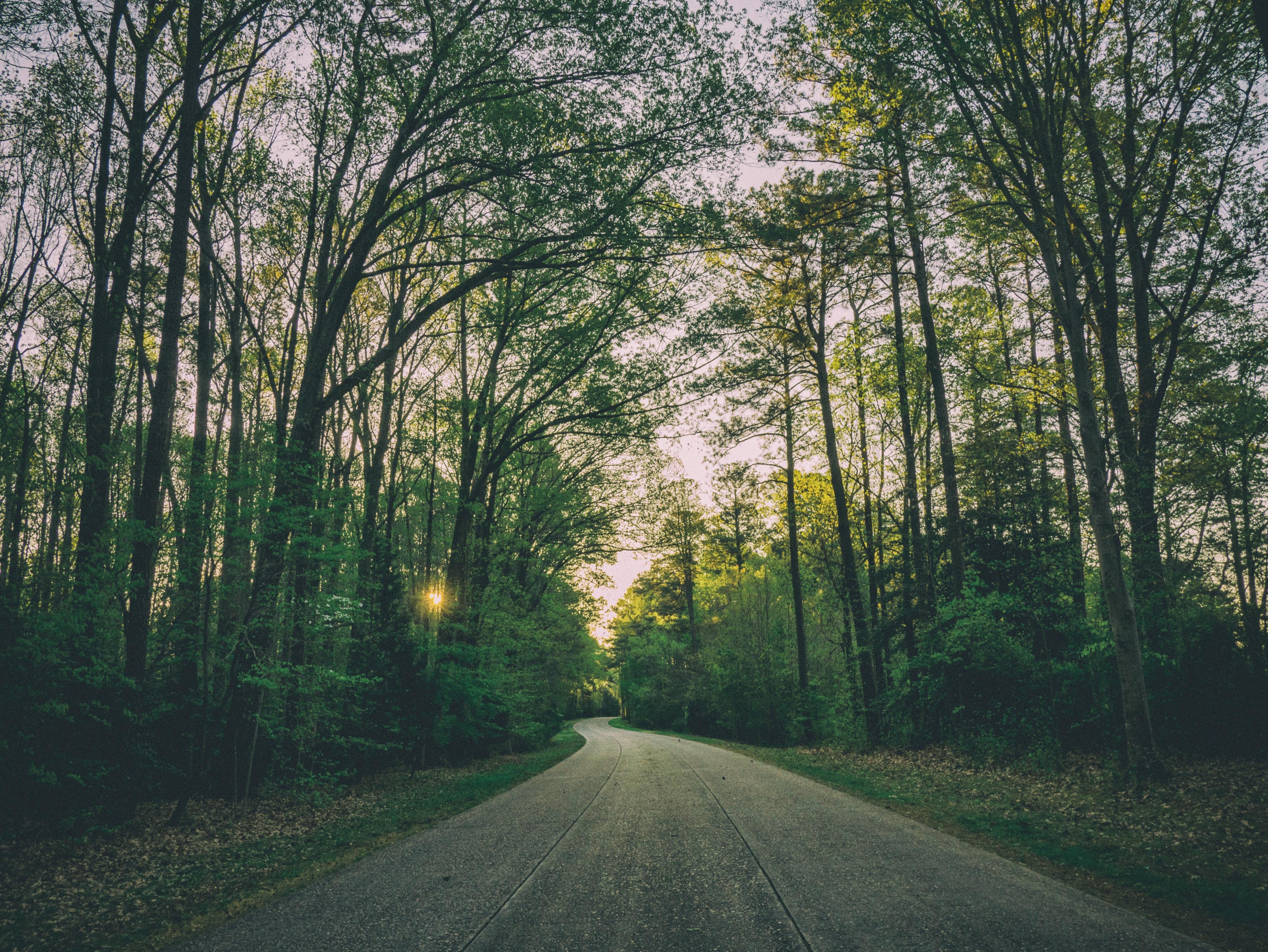 Image - ForestPathGreen - unsplash.jpg
